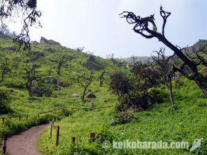 世界の四大花園 ラチャイ国立自然保護区