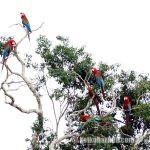 ペルーの自然保護区2017年度TOP10