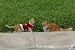 サンタ猫とその友達