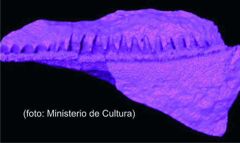 プカパンペリャのサメ