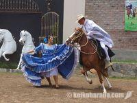 ペルーの伝統馬術「カバージョ・ペルアーノ・デ・パソ」