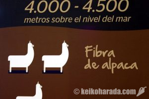 ペルーのアルパカ製品輸出上半期14.5%増