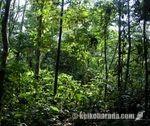 イキトスのジャングル