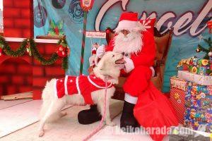 ペルーのクリスマス風景あれこれ