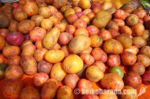 ジャガイモ買取価格下落で農民抗議 各地で道路封鎖