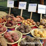 ジャガイモ2週間で通常価格に - 農業灌漑省