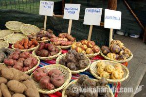 ジャガイモ2週間で通常価格に – 農業灌漑省