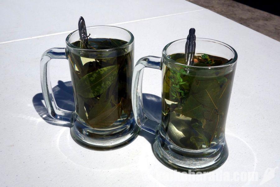 コカ茶とムニャ茶