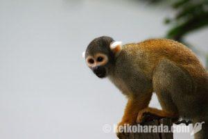 ペルーの野生動物密売取締、昨年度1万398点押収