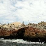 Virú沖合のGuañape島観光開発へ