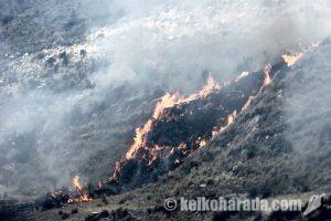 ペルーの森林火災 過去1か月で142件