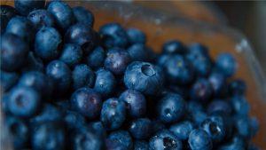 ペルー産ブルーベリー 輸出世界一に現実味