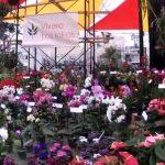Perú Flora 2019