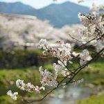 Movimientos migratorios de entrada de peruanos a Japón - abril del 2020