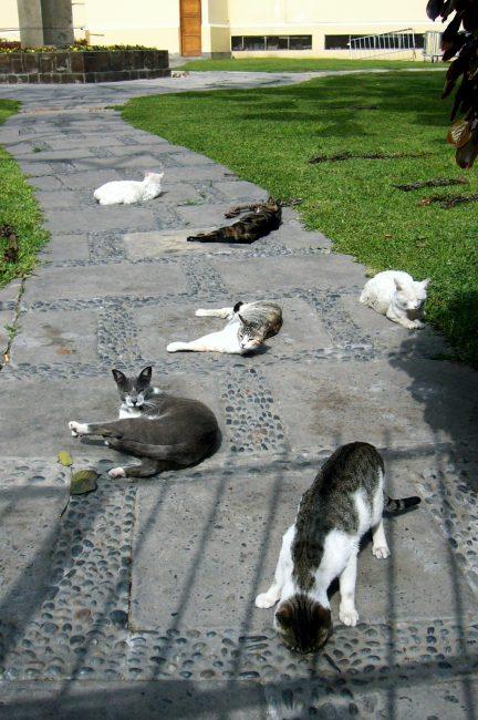 ケネディ公園の猫その1