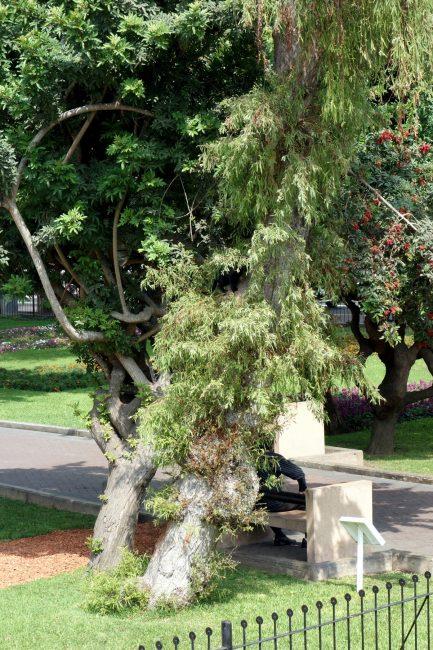 ケネディ公園の猫その2