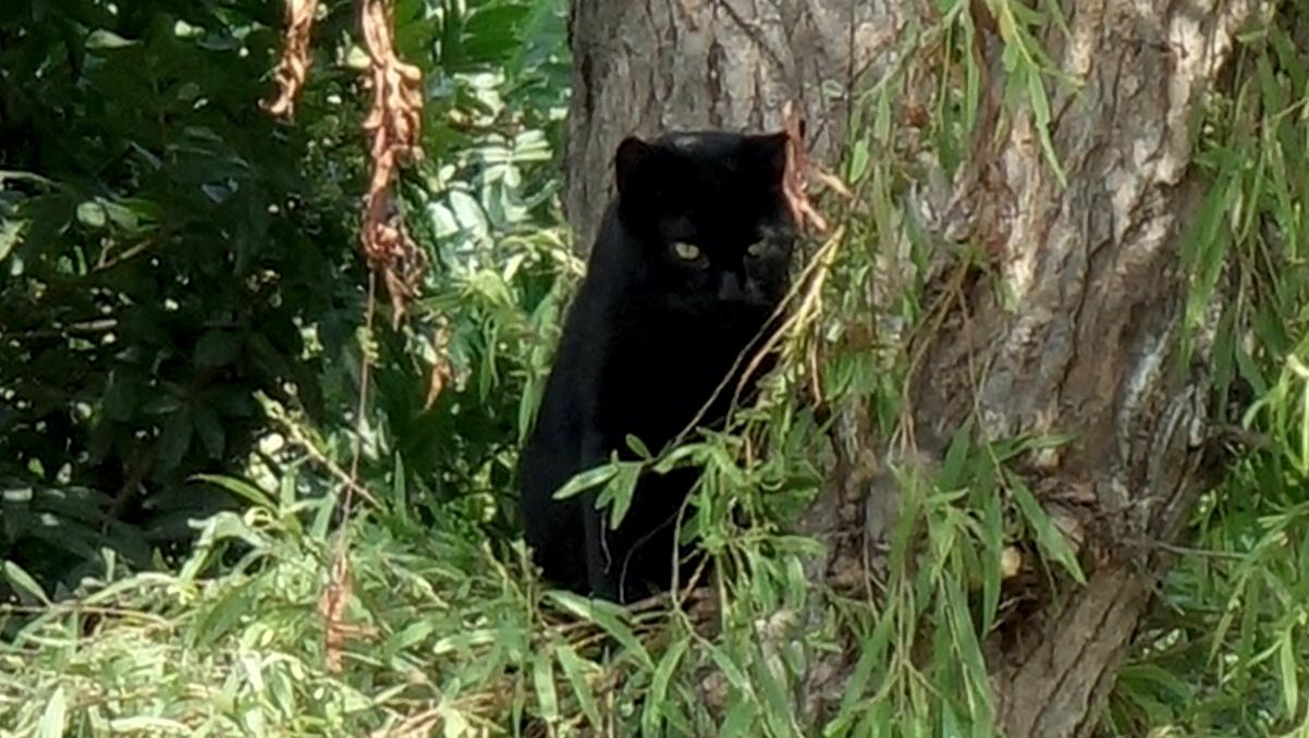 ミラフローレスの木登り猫