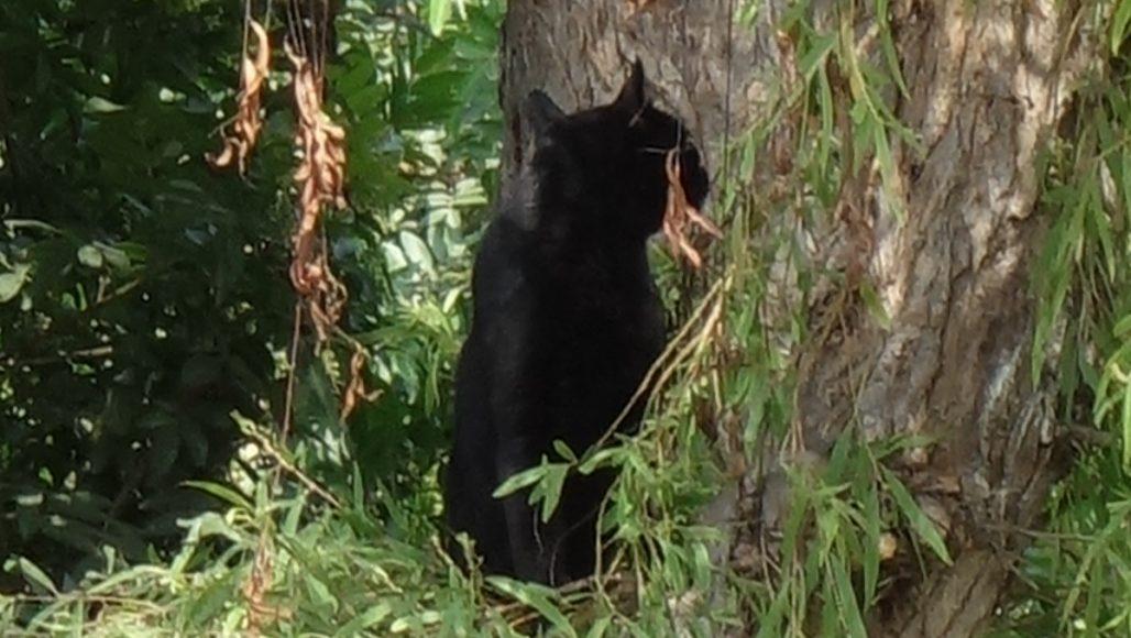 ケネディ公園の猫その4